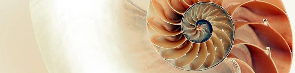 Infinite Shell